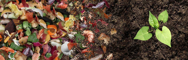 compost-naturel-jardin-bd